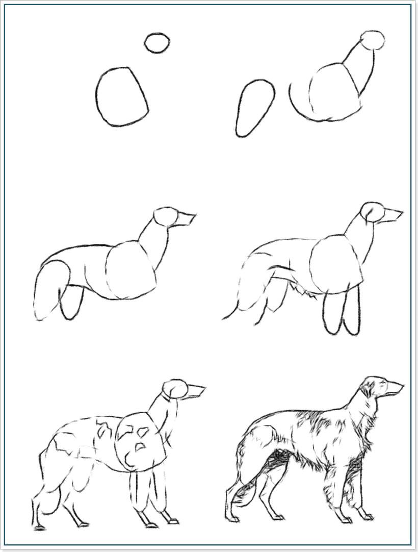 Бассет рисунки 2